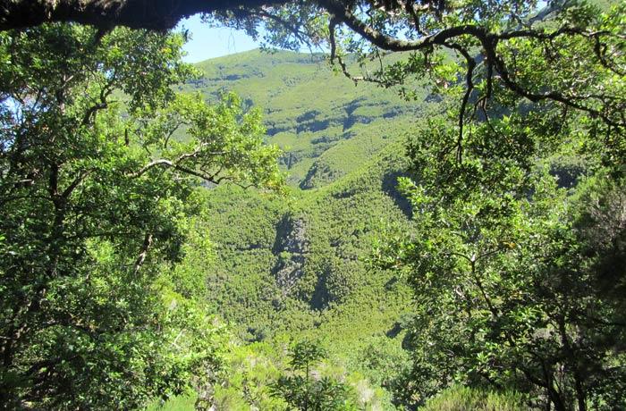 Exuberante vegetación de Madeira levada das 25 fontes