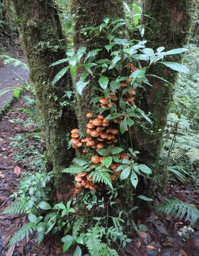 Hongos en un árbol del bosque nuboso qué hacer en Monteverde