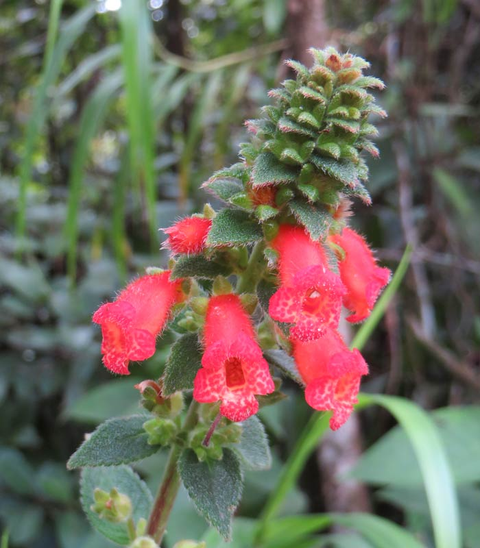 Una flor nacida entre la lava Volcán Arenal