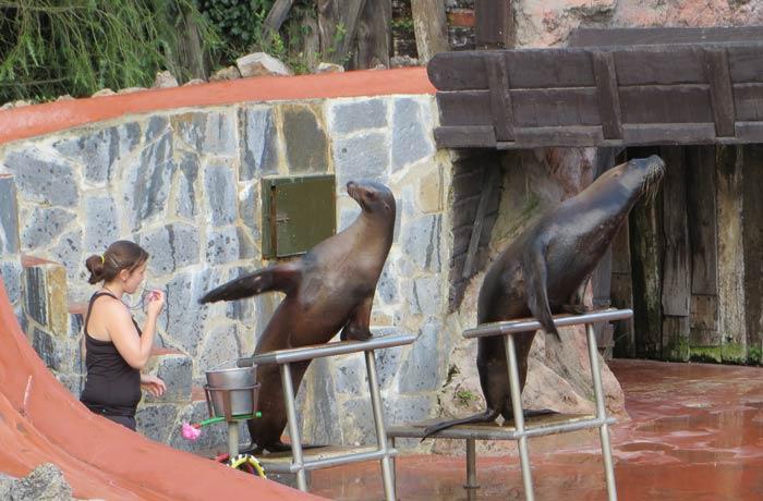 Exhibición de los leones marinos zoo de cabárceno