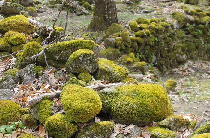 Musgo en las piedras en el tramo más bello de la ruta senderismo en el Jerte