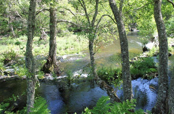 Curso del río Coa entre abundante vegetación ruta en Sabugal